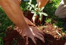 Jóvenes plantan árboles y juntan basura en Misiones
