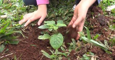 «Para poder resucitarlo»: campamento juvenil sobre el cuidado de la creación